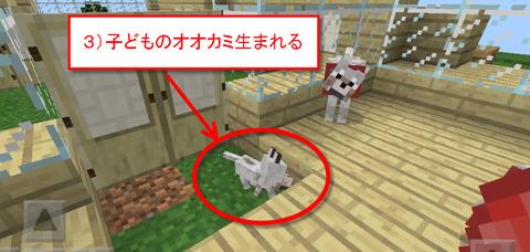 3子どもオオカミ生まれる