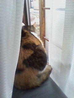 ときどき友猫も来るよ