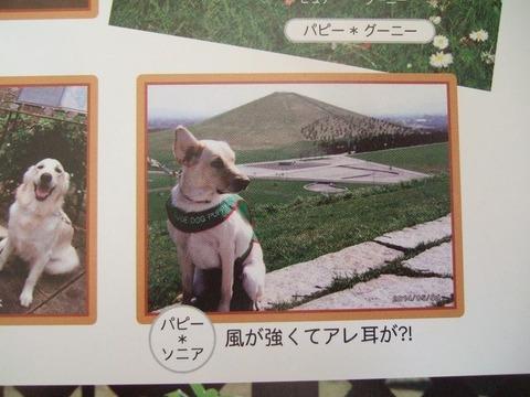 2015年 北海道盲導犬カレンダー Smileより