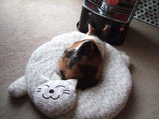 2014_1121_new猫型ベッド
