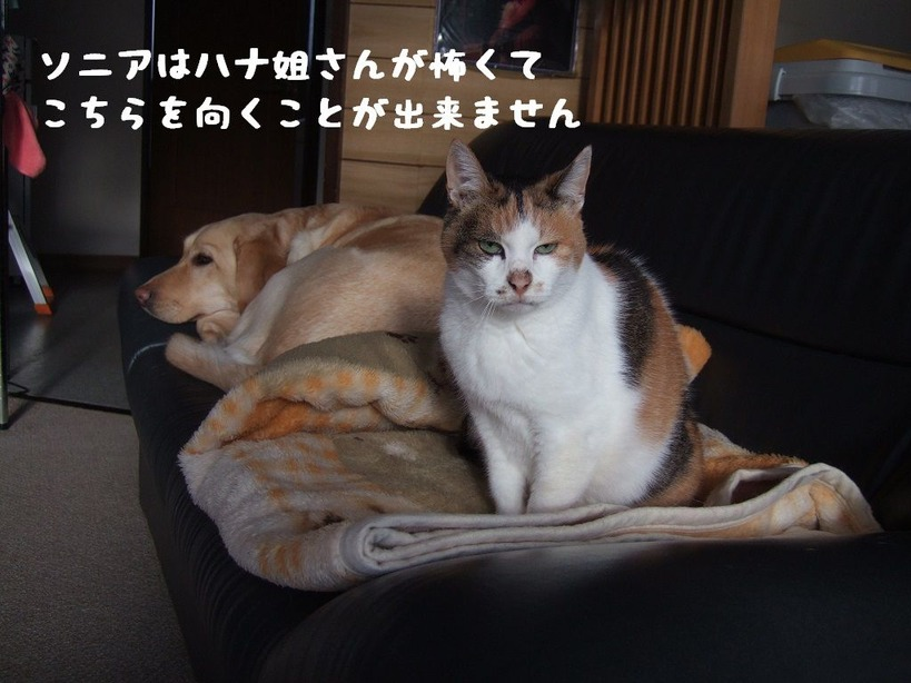 2016_1115_cat and dog