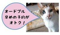 ハナ副料理長 予約オトク! 80%
