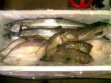 魚0128