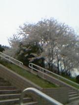 781cd1cf.jpg
