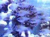 透明な魚の群れ