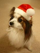 ユイクリスマス