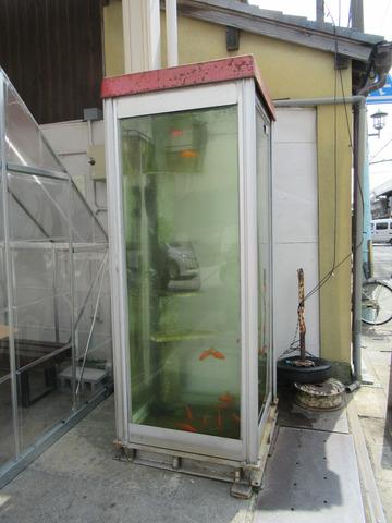 金魚ボックス 20180402