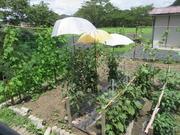 1−家庭菜園の野菜