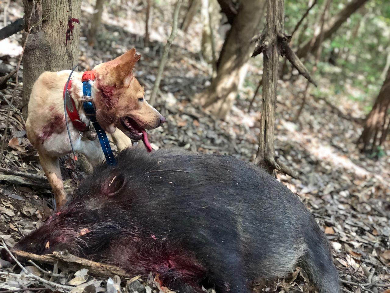 2018年初出猟で・・・ : 猟犬日...