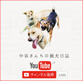 中谷さんちの猟犬日誌