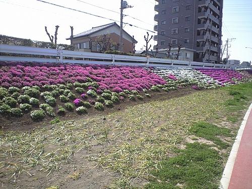4月12日北越谷元荒川3