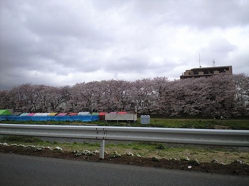 4月9日北越谷元荒川