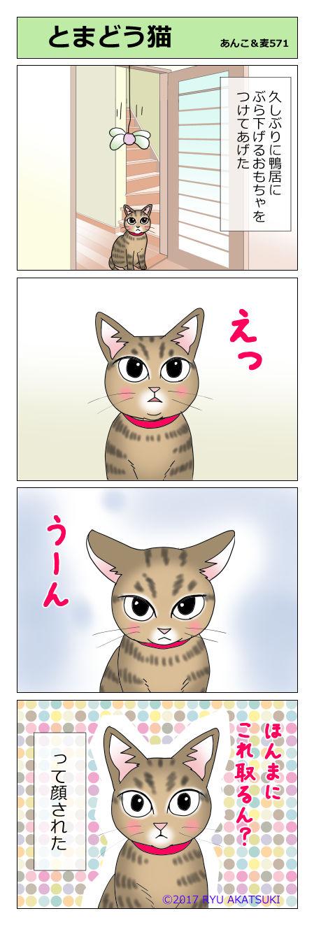あんこ&麦STORY571