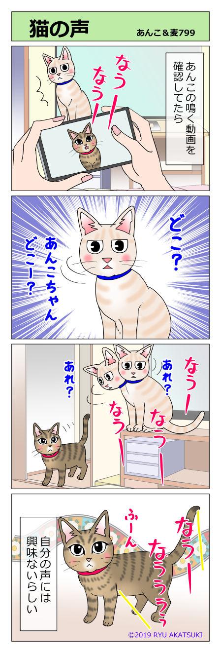 あんこ&麦STORY799