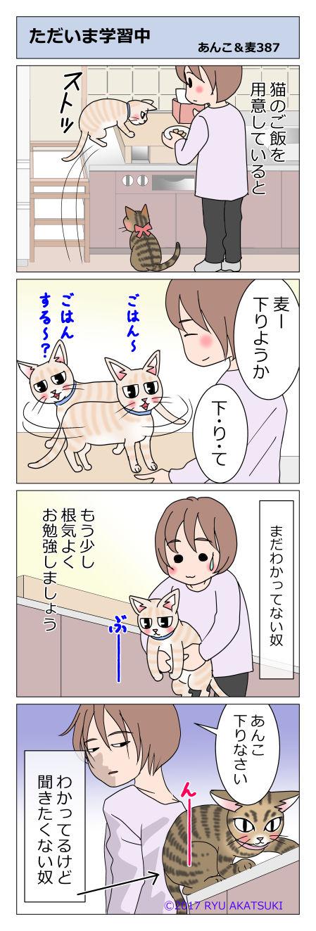 あんこ&麦STORY387