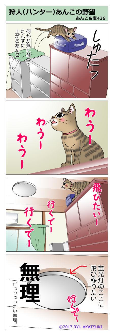 あんこ&麦STORY436