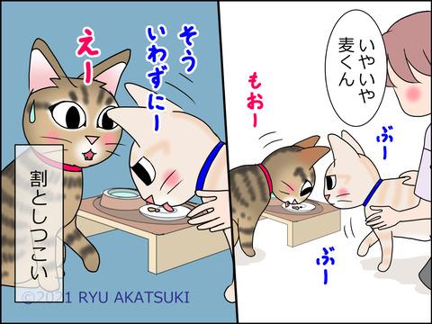 あんこ&麦STORY1447d