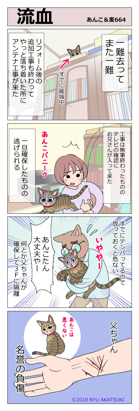 あんこ&麦STORY664
