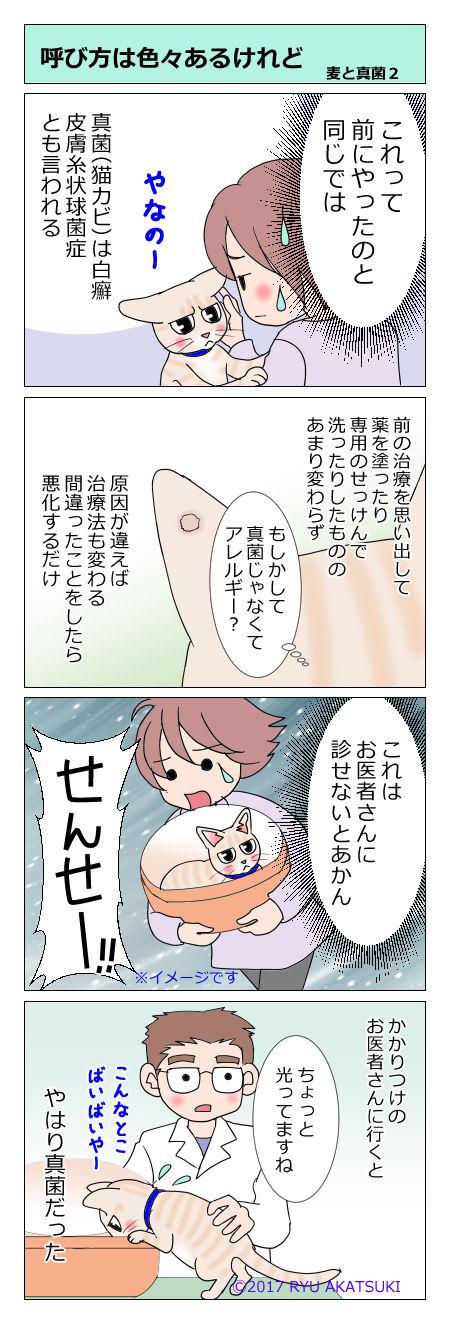 あんこ&麦kenko18