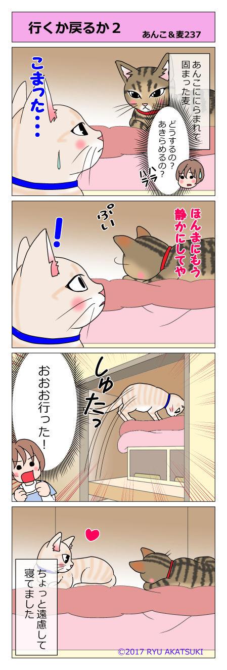 あんこ&麦STORY237