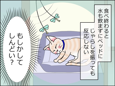 あんこ&麦kenko27d