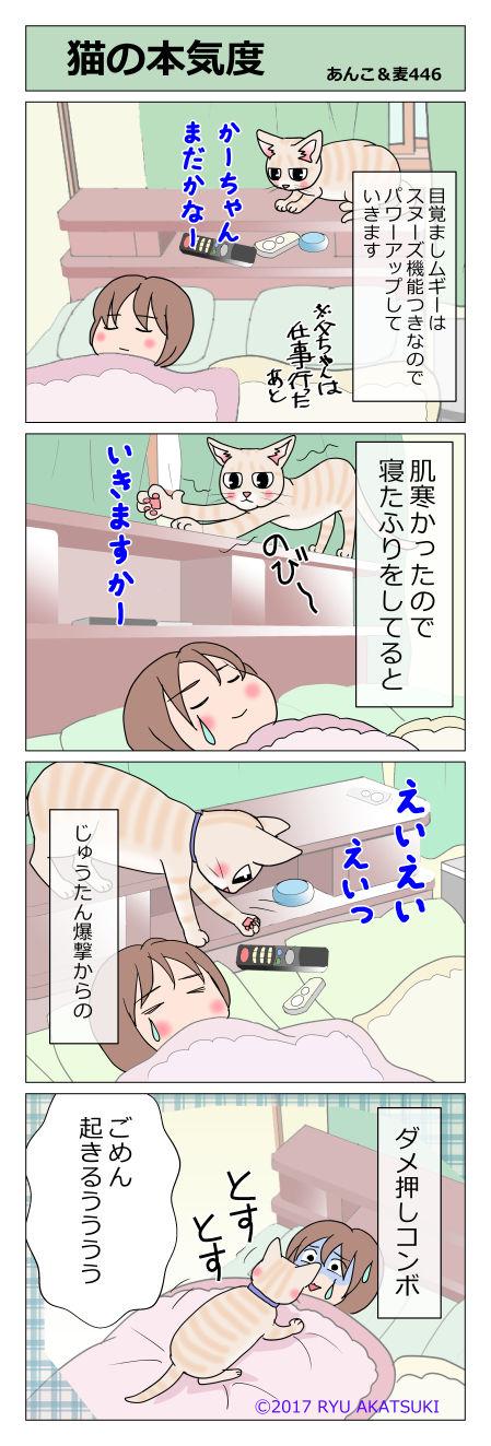 あんこ&麦STORY446