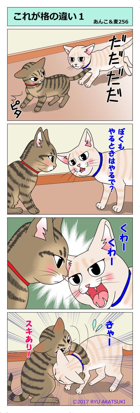 あんこ&麦STORY256