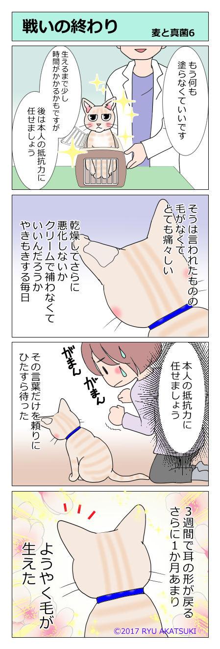 あんこ&麦kenko22