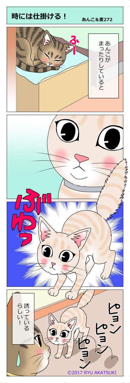 あんこ&麦STORY272