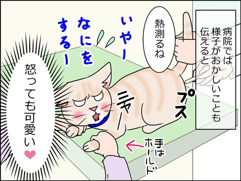 あんこ&麦kenko30a