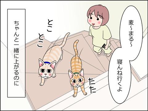 あんこ&麦STORY1435a