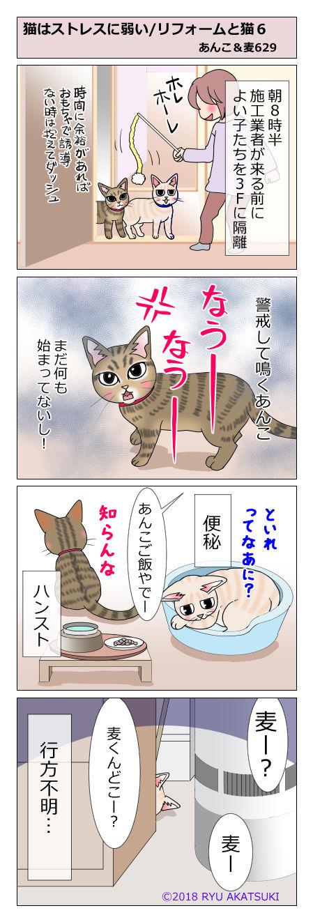 あんこ&麦STORY629
