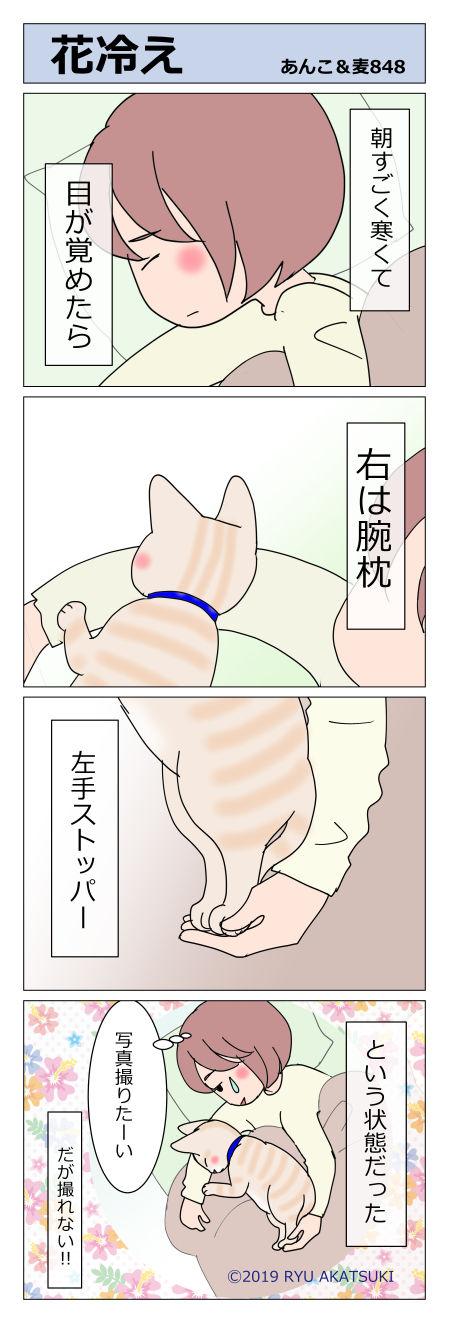 あんこ&麦STORY848
