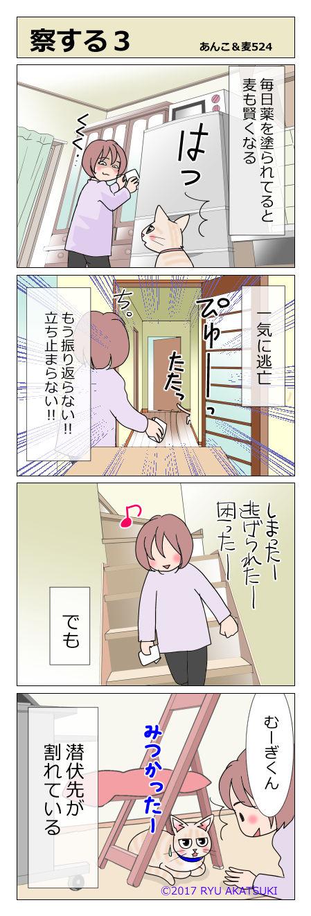あんこ&麦STORY524