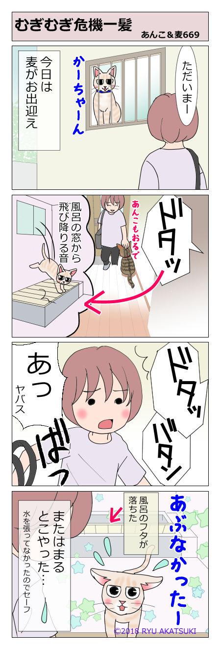 あんこ&麦STORY669