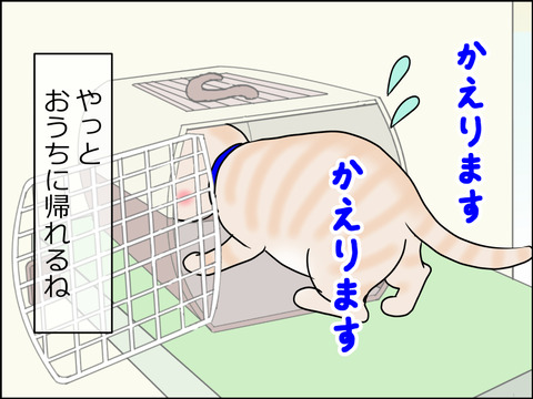 あんこ&麦kenko31d