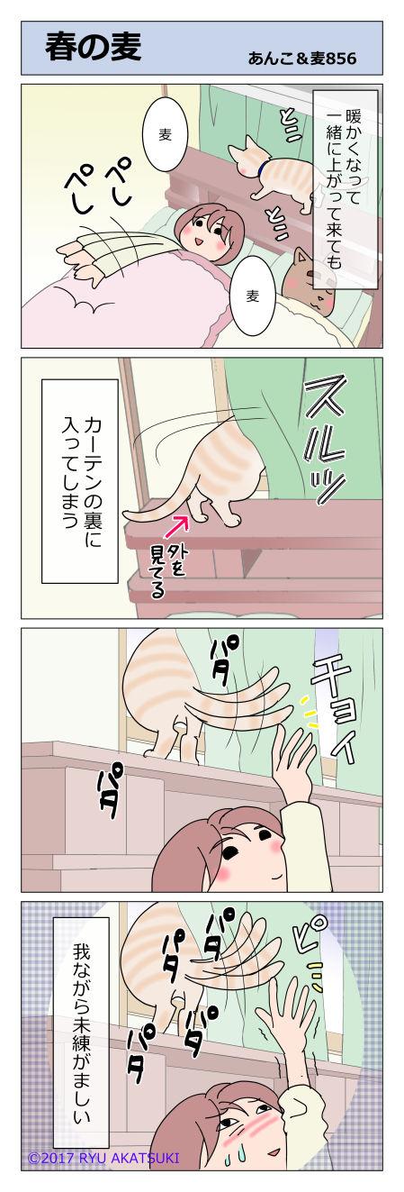 あんこ&麦STORY856