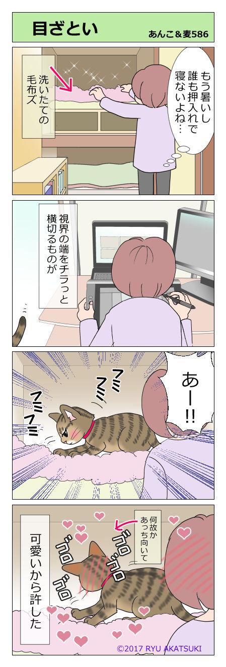 あんこ&麦STORY586