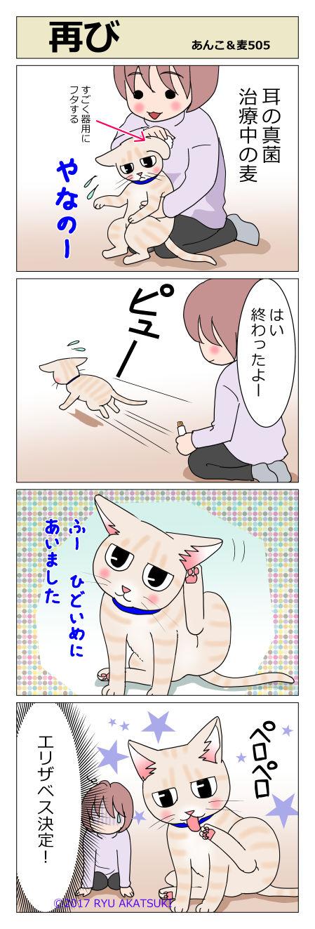 あんこ&麦STORY505
