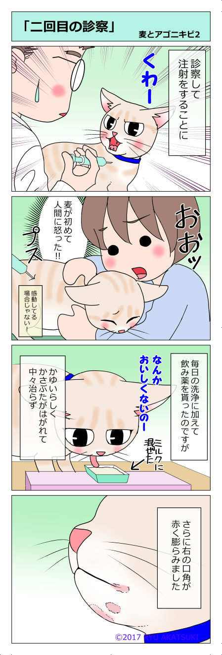 あんこ&麦kenko10