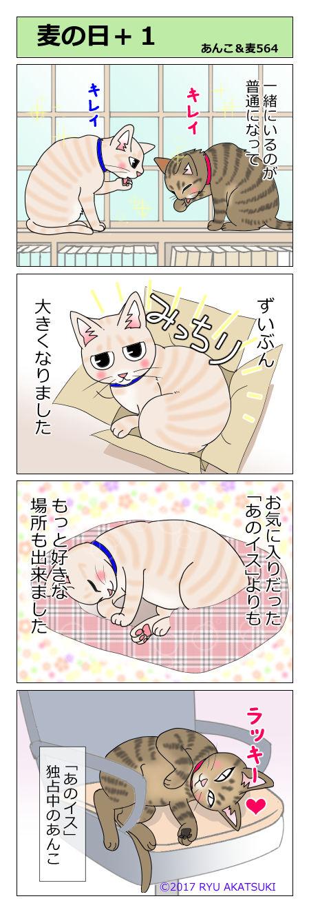 あんこ&麦STORY564