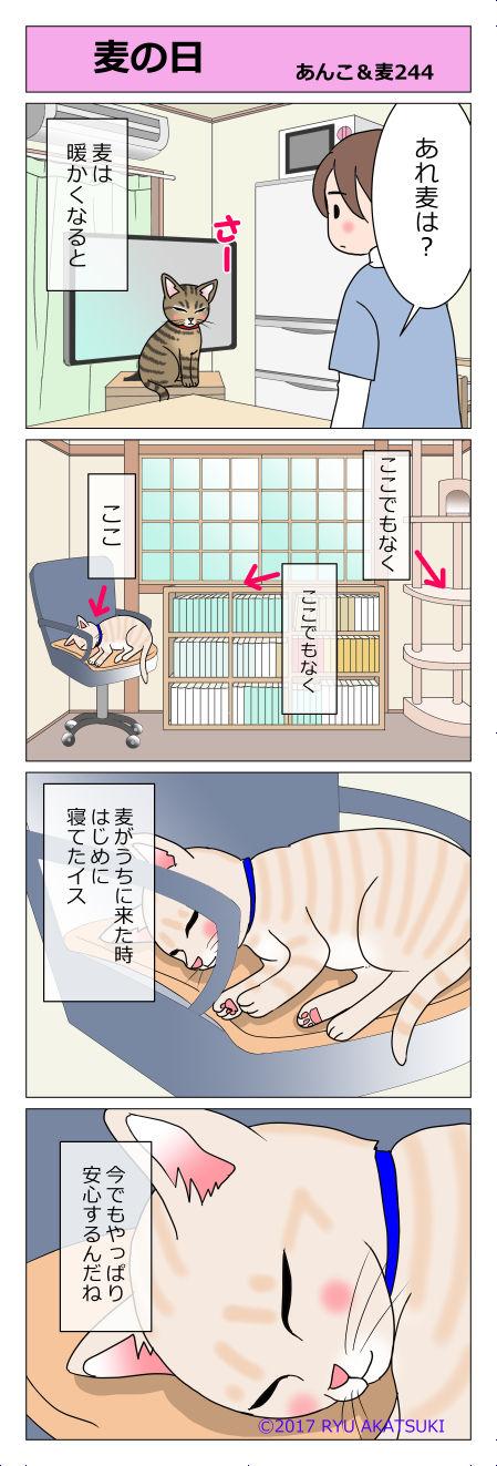 あんこ&麦STORY244