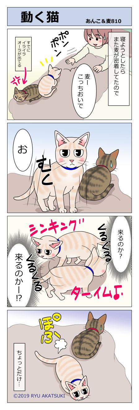 あんこ&麦STORY810