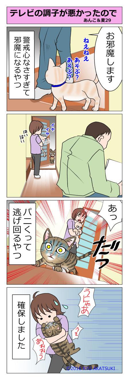 あんこ&麦STORY29