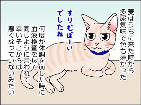 あんこ&麦kenko31b