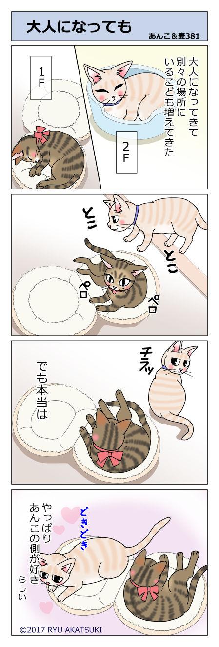 あんこ&麦STORY381