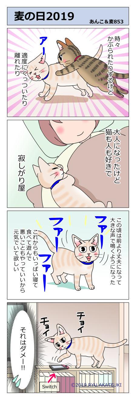 あんこ&麦STORY853