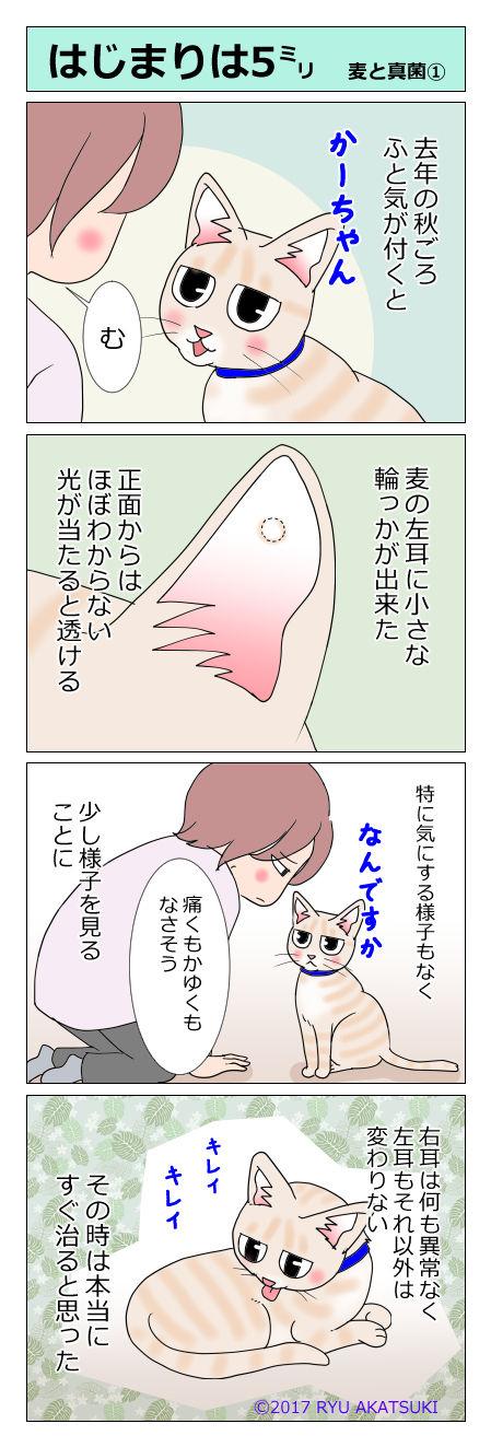 あんこ&麦kenko17