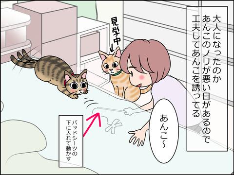 あんこ&麦STORY1445a