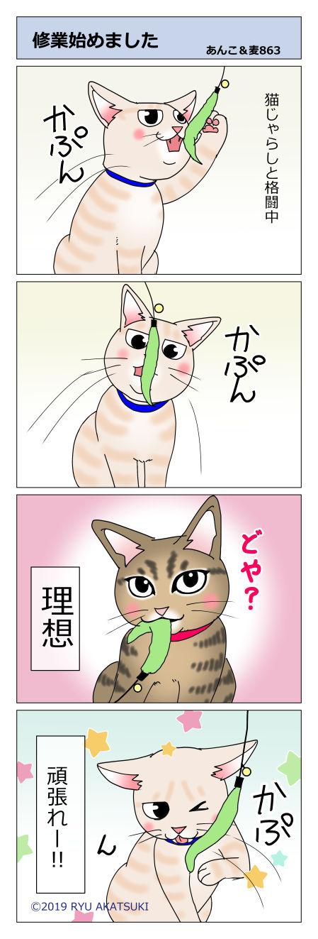 あんこ&麦STORY863